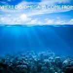 Where Do Omega-3s Come From and Why Should You Care?